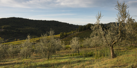 Scenic view of orchard and vineyard, Radda in Chianti, Tuscany, Italy