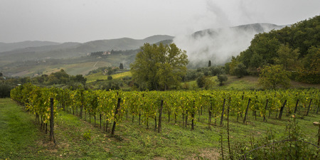 Low level cloud over vineyard in valley, Greve in Chianti, Tuscany, Italy