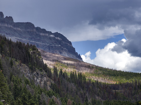 Trees on landscape with mountain range in the background, Going-to-the-Sun Road, Glacier National Park, Glacier County, Montana, USA