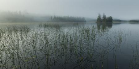Reeds growing in the lake, Kenora, Lake of The Woods, Ontario, Canada Foto de archivo