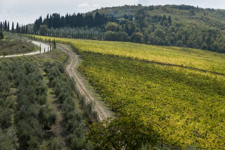 Scenic view of vineyards, Chianti, Tuscany, Italy Stock Photo