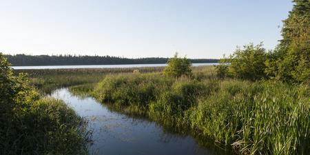 Marshland, Wasagaming, Riding Mountain National Park, Manitoba, Canada Imagens