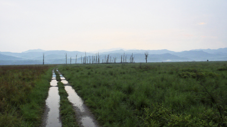 Waterlogged roads in Corbett Tiger Reserve after heavy rain Stock Photo