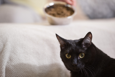 Unrecognizable woman feeding her black cat at home Stock fotó
