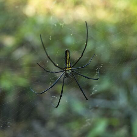 Close-up of a spider on a web, Darjeeling, West Bengal, India