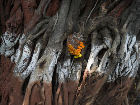 Close-up of garland on a tree trunk, Mumbai, Maharashtra, India Stockfoto