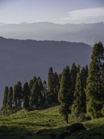 Scenic view of Tukdah Tea Garden, Darjeeling, West Bengal, India