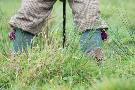 Sitting on a shooting stick in the rushes, wearing tweed