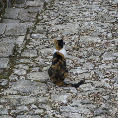 Cat sitting on a stone path leading towards Kotor Castle of San Giovanni, Kotor, Bay of Kotor, Montenegro