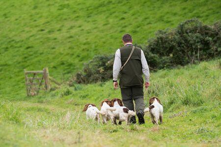 Man walking his four working springer spaniels Reklamní fotografie