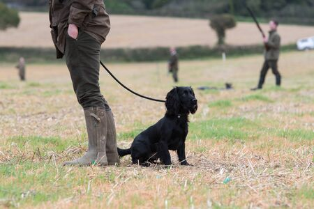 Men out game shooting with a cocker spaniel