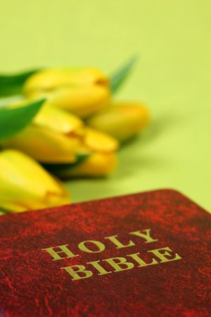 Bible and tulips, copy space Stock Photo - 6029845