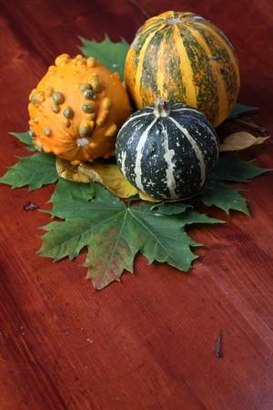 Autumn arrangement with colorful pumpkins. Shallow dof photo