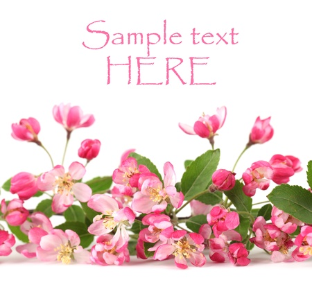 Border made of pink spring flowers isolated on white background photo