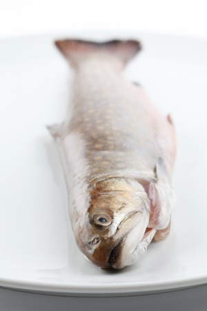 brook trout: Close-up of a speckled trout on white plate