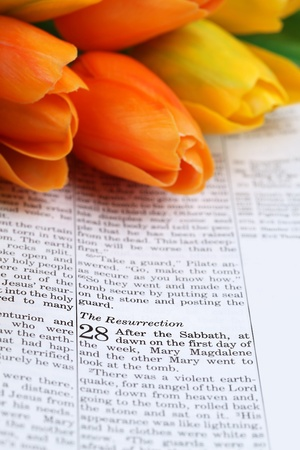 crucify: Open Bible with selective focus on the text in Matthew 28 about Jesus resurrection. Shallow DOF Stock Photo