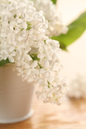 Beautiful white lilac in a vase. Shallow dof photo