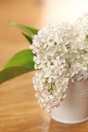 White lilac Stock Photo - 12200031