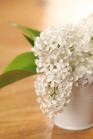 White lilac Stock Photo - 12200031