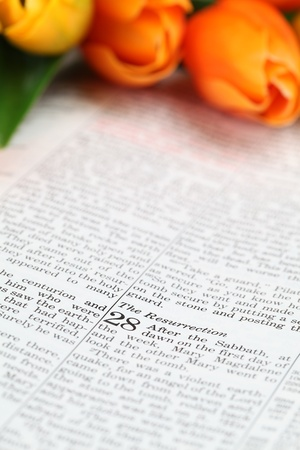 bible flower: Resurrection - Open Bible with selective focus on the text in Matthew 28 Stock Photo