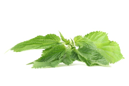 Close-up of fresh stinging nettle isolated on white background  Shallow dof Stock Photo - 14123570