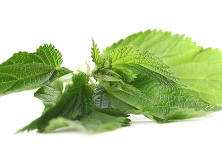 Fresh stinging nettle isolated on white background  Shallow dof photo