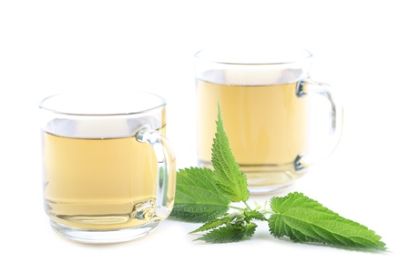 Nettle and freshly made nettle tea in glass cups isolated on white background  Shallow dof, focus on nettle Stock Photo - 14620479