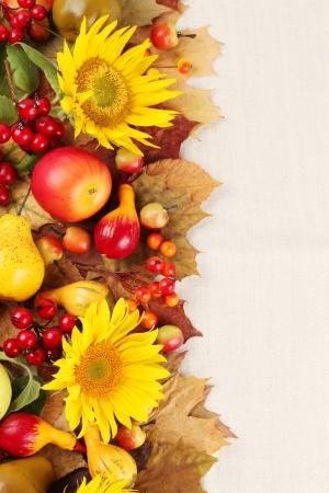 Autumn frame mit Obst, Kürbisse und Sonnenblumen Standard-Bild - 14782007