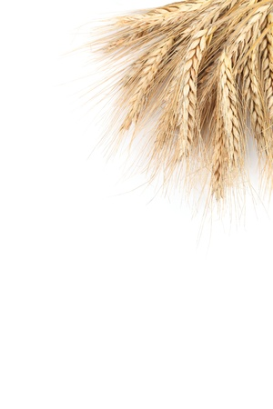 spikes: Barley frame isolated on white background with copy space