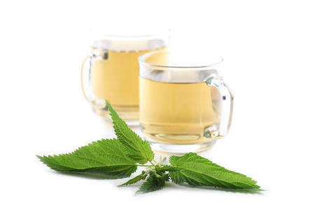 Nettle and freshly made nettle tea in glass cups isolated on white background  Shallow dof, focus on nettle Stock Photo - 14782013