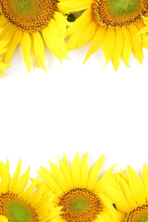 Frame made from beautiful yellow sunflowers isolated on white background photo