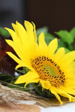Autumn arrangement with beautiful sunflower  Shallow dof photo
