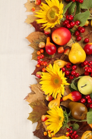 Autumn frame with fruits, pumpkins and sunflowers photo