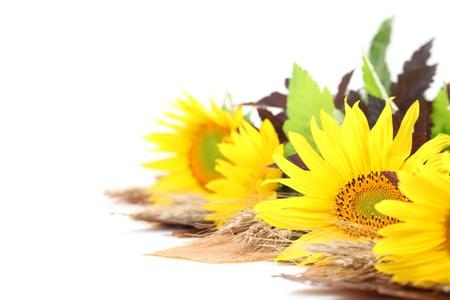 autumn arrangement: Autumn arrangement with beautiful sunflower isolated on white
