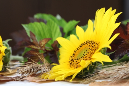 autumn arrangement: Autumn arrangement with beautiful sunflower  Shallow dof