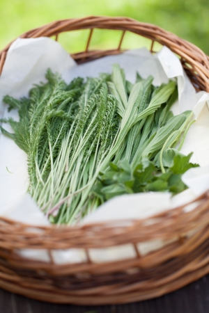 Yarrow, plantain and lady s mantle Stock Photo - 20626163