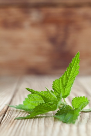 Close-up of fresh stinging nettle on wooden background  Shallow dof Stock Photo - 20893591