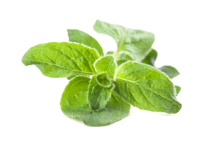 oregano plant: Close-up of oregano isolated on white background  Shallow dof Stock Photo