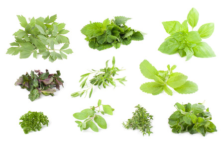 herbs white background: Collection on herbs isolated on white background Stock Photo