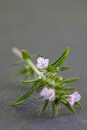 savory: Close-up of fresh blooming savory on black slate background Stock Photo