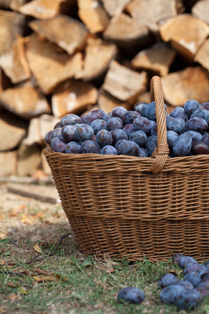 heaped: Fresh organic plums in a wicker basket