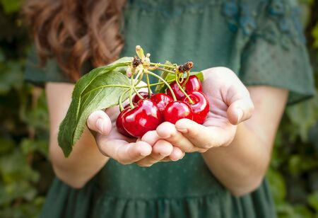 Isolated young woman with big red cherries in her hands. Cherry with leaf and stalk. Cherries with leaves and stalks. One person on the natural green background. Big variety of cherries. Varieties: Frisco, red Giant, 3-13, bloom cherries. Good harvest of juicy ripe cherries.