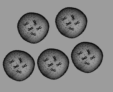 microbio: Cinco microbio blanco y negro se ve en un microscopio en un consultorio m�dico
