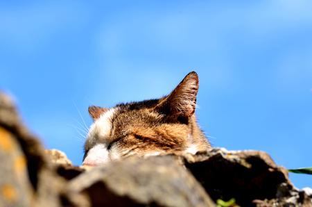 tuscia: cat
