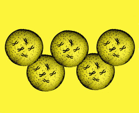 microbes: Olympians yellow microbes Stock Photo