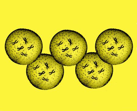 Olympians yellow microbes Stock Photo
