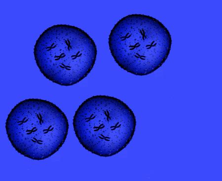 microbio: Cuatro azul microbio visto en un microscopio en un consultorio médico
