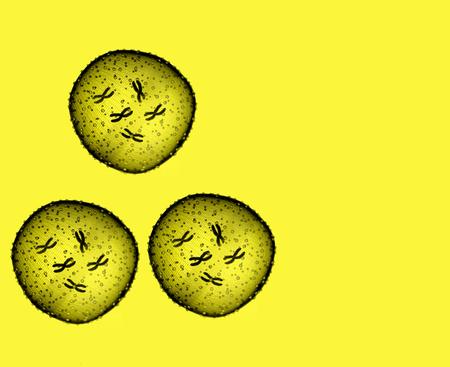 microbio: Tres amarilla microbio visto en un microscopio en un consultorio m�dico
