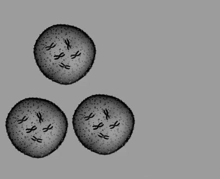 microbio: Tres microbio blanco y negro se ve en un microscopio en un consultorio m�dico Foto de archivo