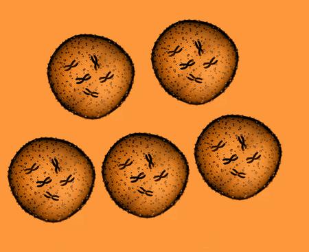 microbio: Cinco de naranja microbio visto en un microscopio en un consultorio médico Foto de archivo